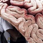 Gehirn (0)